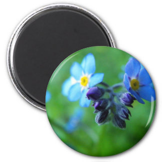Focus On Forget-Me-Nots 2 Inch Round Magnet