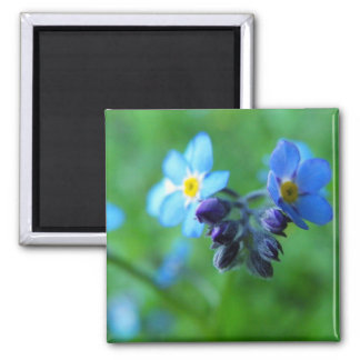 Focus On Forget-Me-Nots 2 Inch Square Magnet