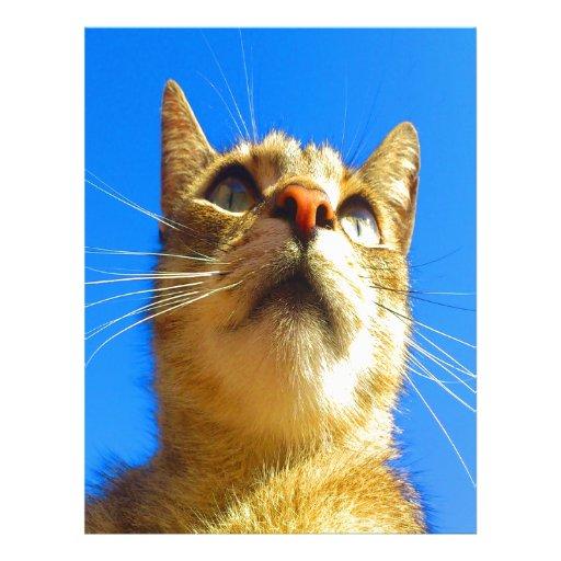 Focus on goal and success cat custom letterhead