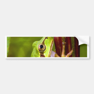 focus on goal and success tree frog bumper sticker