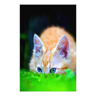 focus on opportunity and success cat stationery