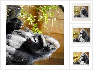 Focused Gorilla Gifts