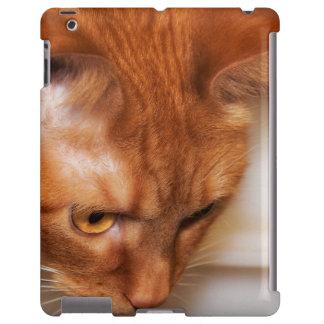 Focused Humane Society cat