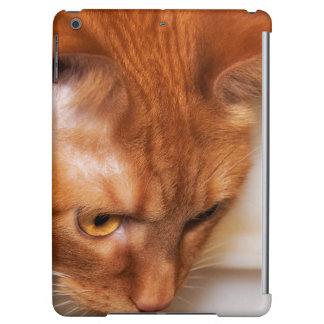 Focused Humane Society cat iPad Air Covers