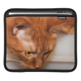 Focused Humane Society cat iPad Sleeve