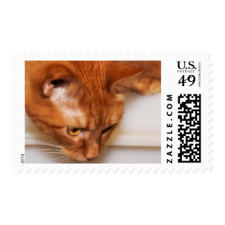 Focused Humane Society cat Postage Stamps