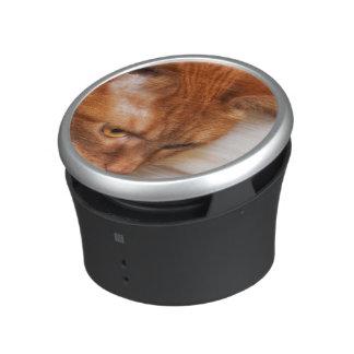 Focused Humane Society cat Speaker