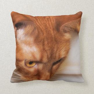 Focused Humane Society cat Throw Pillow