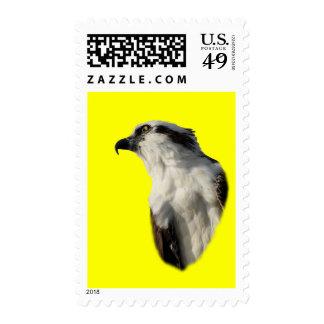 Focused Osprey Postage Stamps