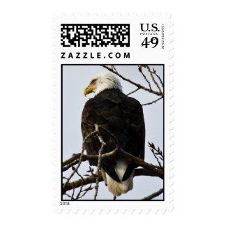 Focused Postage Stamp