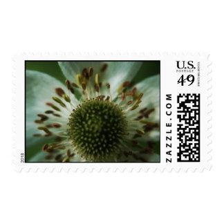 Focused Stamp