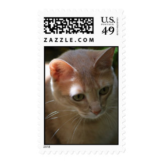 focusing stamps