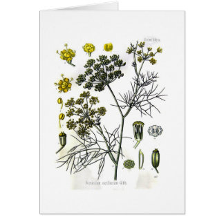 Foeniculum capillaceum(fennel) card
