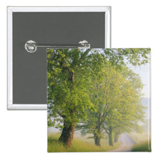 Fog covered road, Cades Cove, Great Smoky Pinback Buttons
