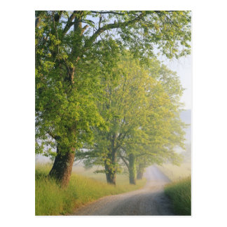 Fog covered road, Cades Cove, Great Smoky Postcard