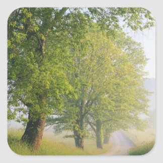 Fog covered road, Cades Cove, Great Smoky Stickers