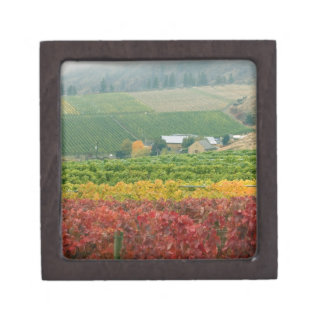 Fog creeps over Gehring Brothers Winery nestled Jewelry Box