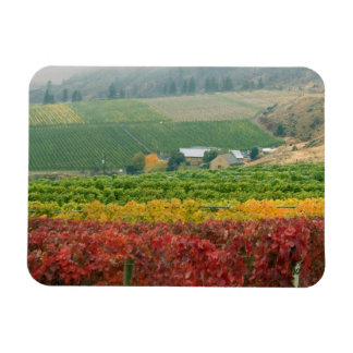 Fog creeps over Gehring Brothers Winery nestled Magnet