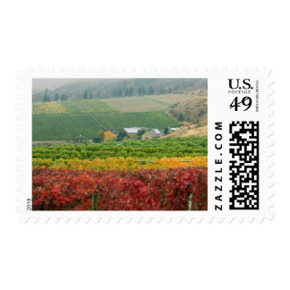 Fog creeps over Gehring Brothers Winery nestled Postage
