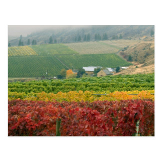 Fog creeps over Gehring Brothers Winery nestled Postcard