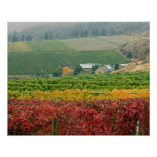 Fog creeps over Gehring Brothers Winery nestled Poster