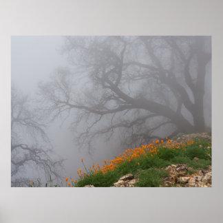 Fog Fire Print