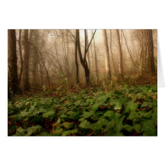 Fog In The Forest Trees And Ground Cover Photo Card