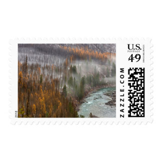 Fog Rolls In On Autumn Larch Trees Postage