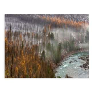 Fog Rolls In On Autumn Larch Trees Postcard