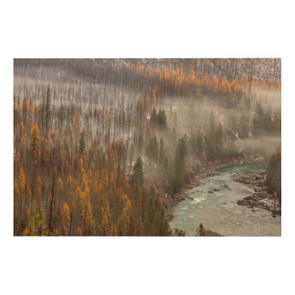 Fog Rolls In On Autumn Larch Trees Wood Canvases