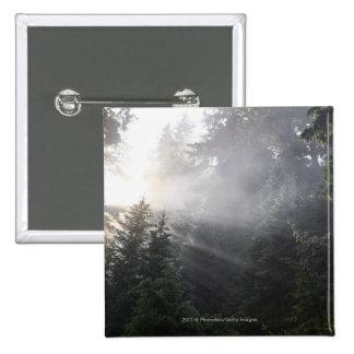 Fog & Sun Beams in a Washington Forest Button