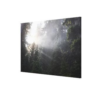 Fog & Sun Beams in a Washington Forest Canvas Print