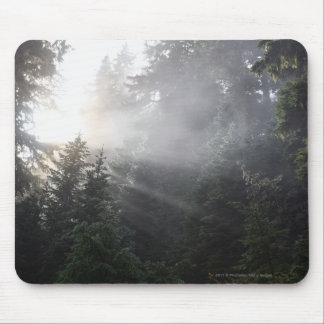Fog & Sun Beams in a Washington Forest Mouse Pad