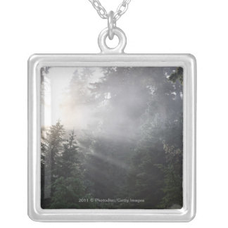 Fog & Sun Beams in a Washington Forest Silver Plated Necklace