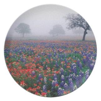 Foggy Bluebonnet Field Plate
