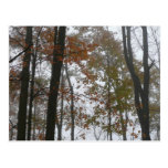 Foggy Fall in Pennsylvania Postcard