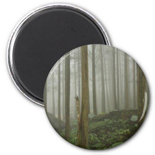 Foggy Forest 2 Inch Round Magnet