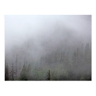 Foggy Forest Postcard