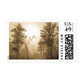 Foggy Forest Sepia - Stamp
