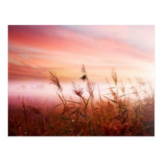 Foggy Landscape.Early Morning Mist. Postcards