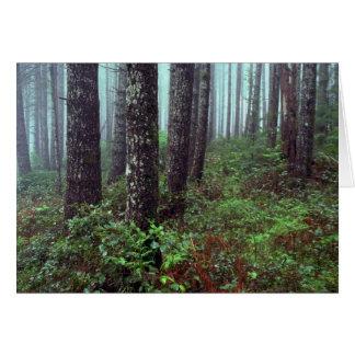 Foggy morning, Coast Range, Oregon Greeting Card