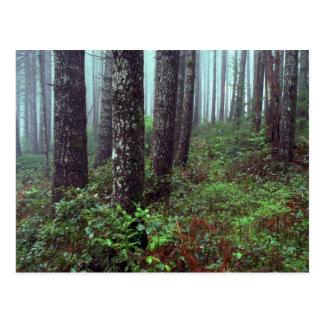 Foggy morning, Coast Range, Oregon Postcard