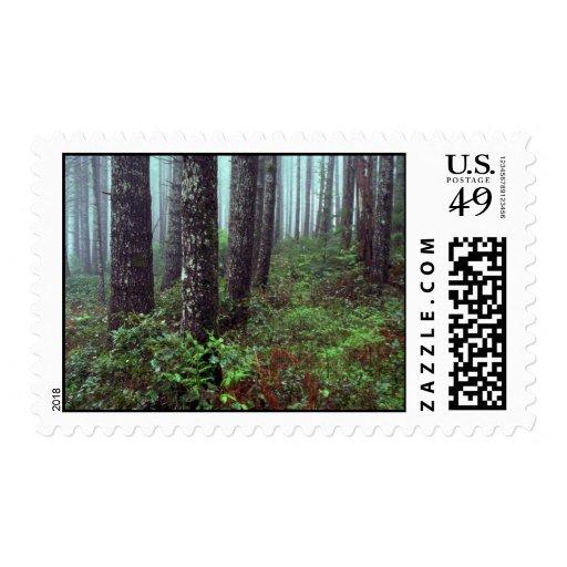 Foggy morning, Coast Range, Oregon Stamp