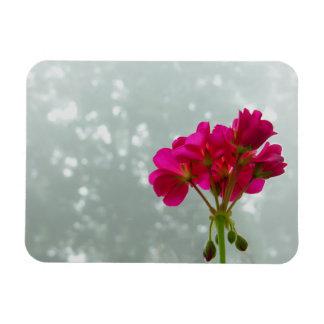 Foggy Morning Geranium Photo Magnet