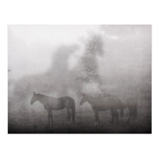 Foggy Morning Horse Post Cards