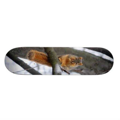 Foggy Morning Squirrel Custom Skate Board