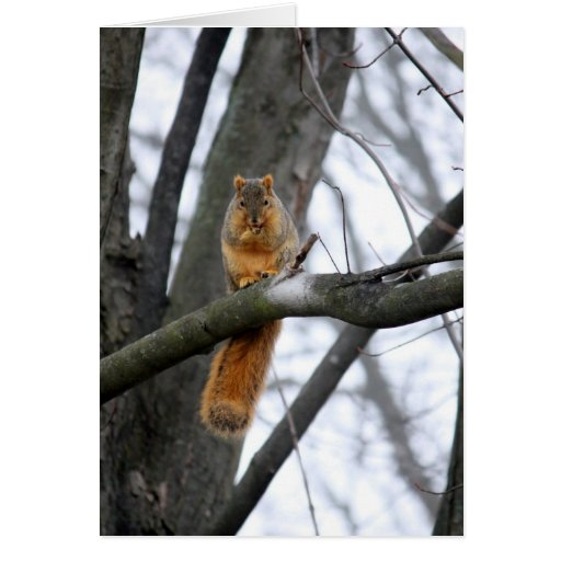 Foggy Morning Squirrel Greeting Cards