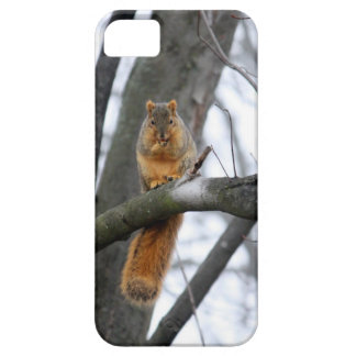 Foggy Morning Squirrel iPhone 5 Cover