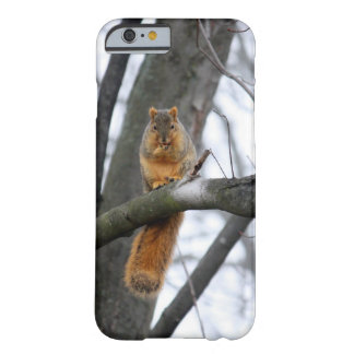 Foggy Morning Squirrel iPhone 6 Case