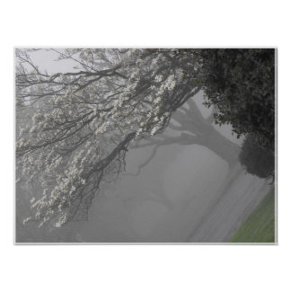 Foggy Mornings 11 Poster